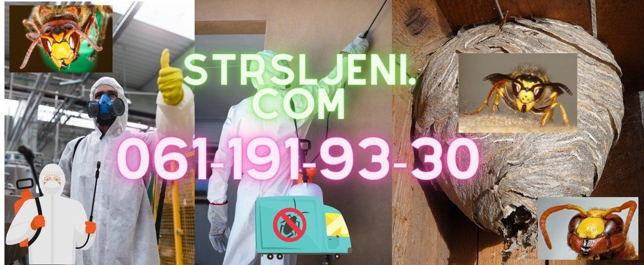 Regulacija i odnošenje gnezda stršljena i osa u Beogradu,Novom Sadu,Vojvodini i ostalim mestima u Srbiji od strane starijih edukovanih sertifikovanih ddd tehnologa sa minimum 5+ godina radnog iskustva u svojoj delatnosti.Izdajemo garantni list i račun po završenom tretmanu i intervenciji.Imamo preko 12+ godina radnog iskustva u regulaciji stršljena i osa.Posao radimo detaljno od početka do kraja sertifikovanim preparatima uz akcenat na očuvanju čovekove sredine i eko sistema.
